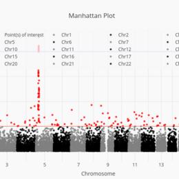Manhattan Plot